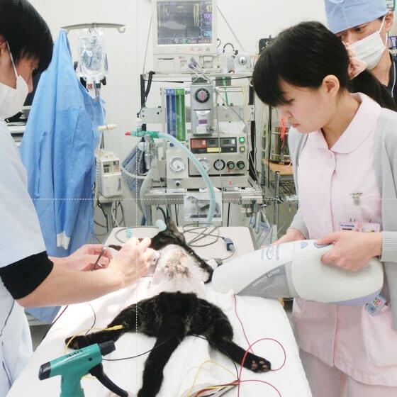 手術の補佐