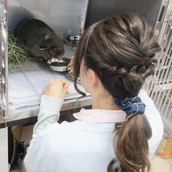 入院動物のお世話