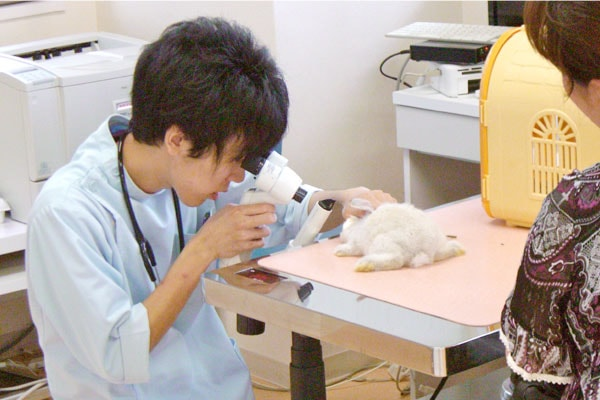 ウサちゃんの一般診療