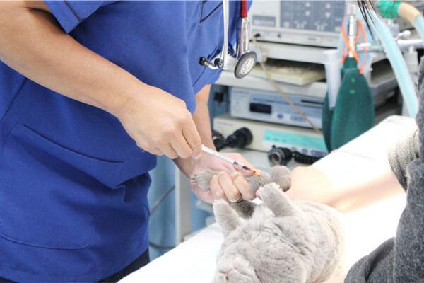 ウサギの健康診断